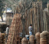 Prez clears ordinance amending Forest Act, bamboo not a 'tree' any more